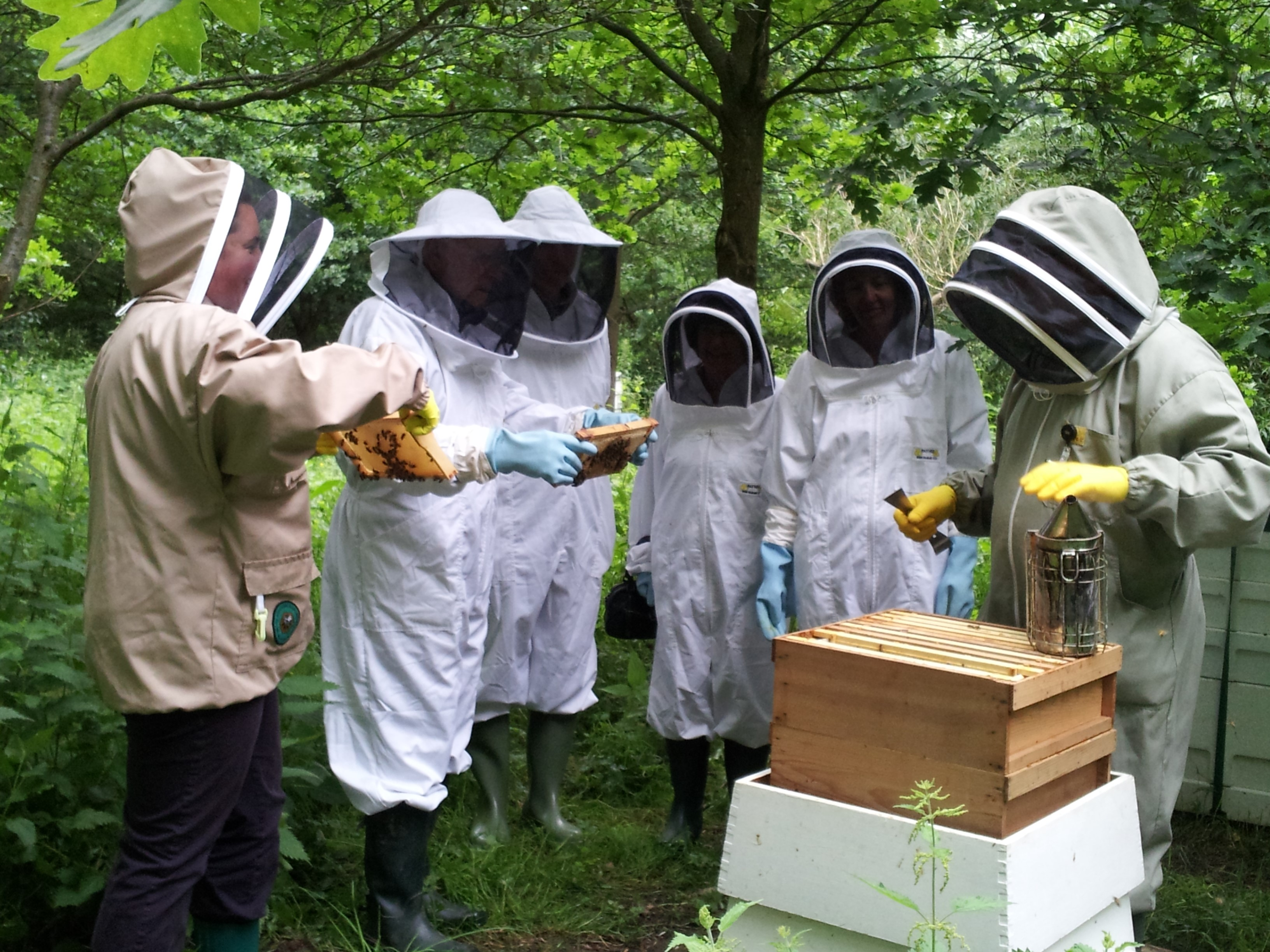 Meet the Bees & Tour of the Estate with Lunch